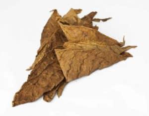 tabakblatt